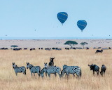 African Balloon Safari