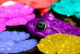 PurpleFrog&LilyPads
