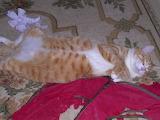 Teddy Relaxing