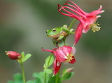 frog in the flowers