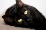 Cat-black1