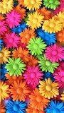 #Rainbow of Daisies