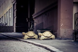 Turtles in Finland