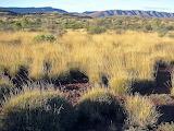 Australian savannah