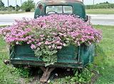 Old truck flowerbed