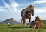 Cai pe muntele Bianditz-Spania