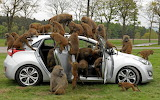 Trees baboons car monkey humor