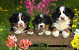 Animals, dogs, summer, grass, flowers, nature, puppies, box