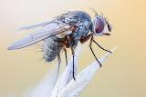 Macro fly by John Hallmen