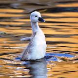 ☺Baby Swan...