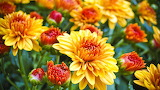 ^ Yellow rust mums