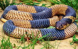 #Snake in High Definition