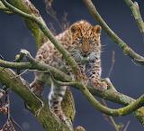 ☺♥ Cute leopard cub...