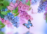Flowers, spring, lilac, butterfly