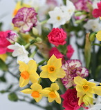 ^ Scented narcissi and long-lasting spray carnations