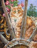 lovely red hair cat