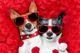 cute dogs wearing sunglasses