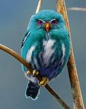 Beautiful owl photo