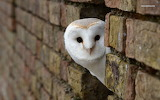 Cute-owl-pictures-download