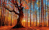 Autumn sunset in the forest