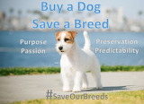 Buy a Dog, Save a Breed