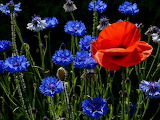 ☺ Red and blue...