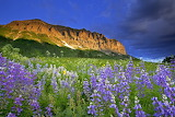 Mountains Lupine base of Gothic Mountain