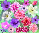 Flower Spread - pink & purple