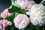 De mi jardín 919