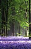 PurpleFlowerForest