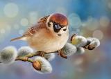 Birds Sparrow Closeup Painting Art verba Branches 568404 1280x90