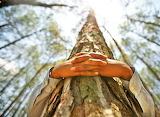 Hug a Tree Today