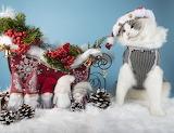cat, sleigh