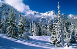 Landscapes nature winter snow trees