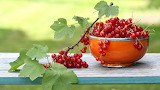 Leaves, branch, cup, red, currants, garden, fruit, food