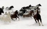 Sfondo_cavalli_1600