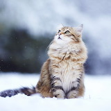 Beautiful Kitty in the Snow...