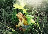 Fairy fairy tale fantasy 0