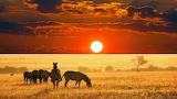 Zebra african sunset