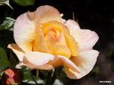 Kwiaty-Bogda Strzelczyk