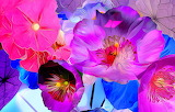 Abstract, flowers, rendering, paint, petals, colourful