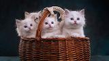 Gatos traviesos