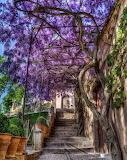 Garden at The Alhambra Granada Spain