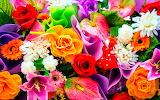 Flowers - Flors