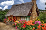 Nice cottage with many dahlias