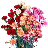 ^ Carnation Spray