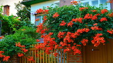 Trees, house, trees, wicket, nature, Flowering, Yard, Red flower