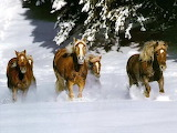 -horses-in-snow