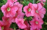 Floral-516
