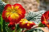 Flores522